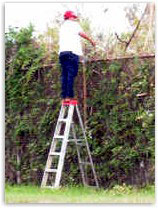 Picture of Top step danger for fencing work