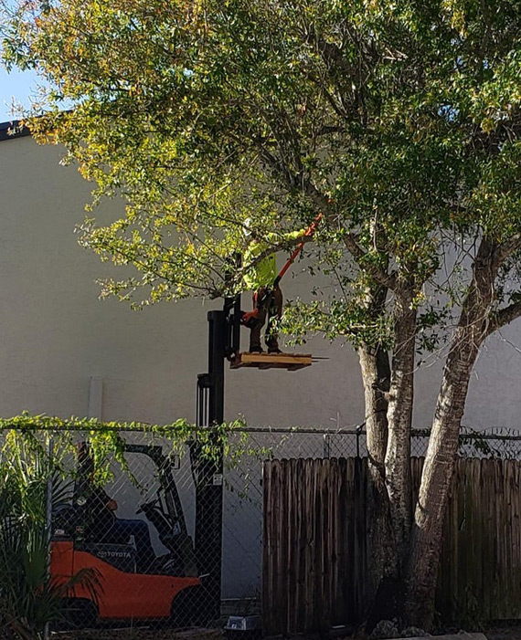 Picture of Cutting tree limbs from a pallet on a forklift is a good way to have a horrific accident