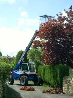 Tree Surgery at High Risk