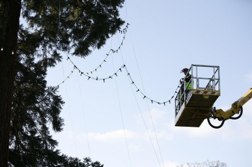 Facelift install Wakehurst Christmas tree lights